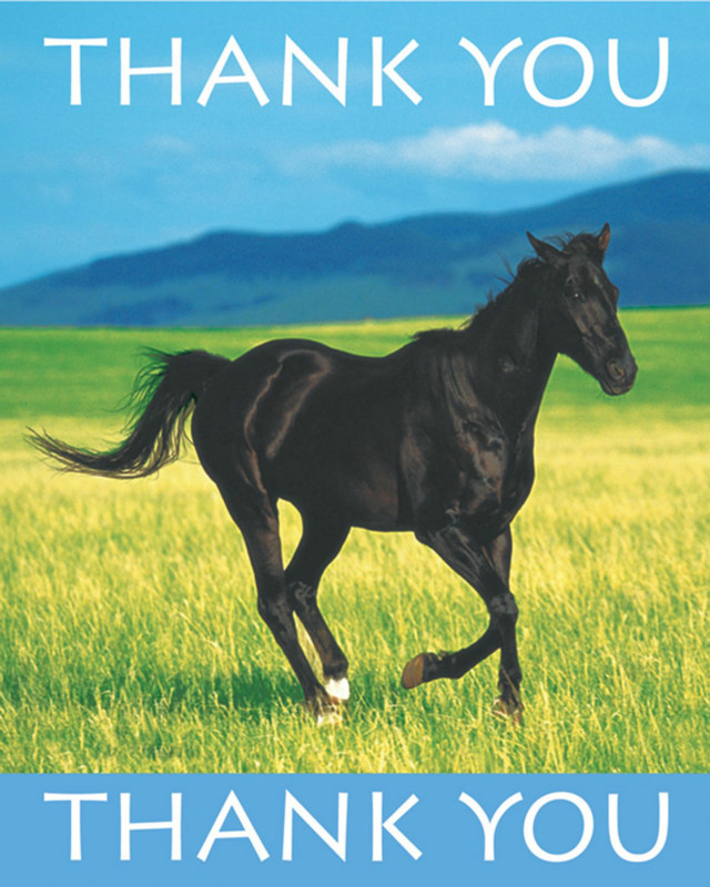 Wild Horses Thank You Cards (8 count)
