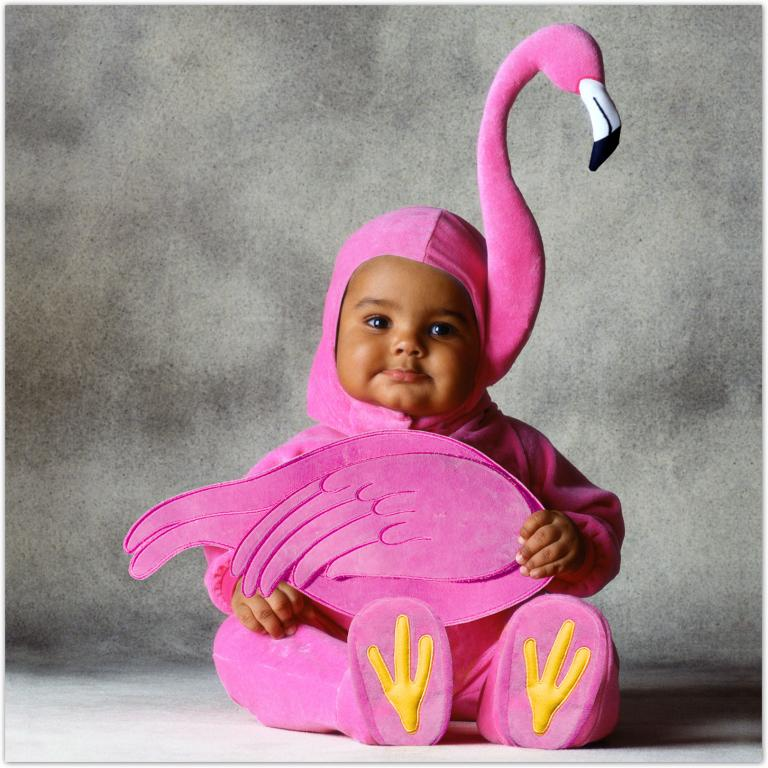 Tom Arma Flamingo