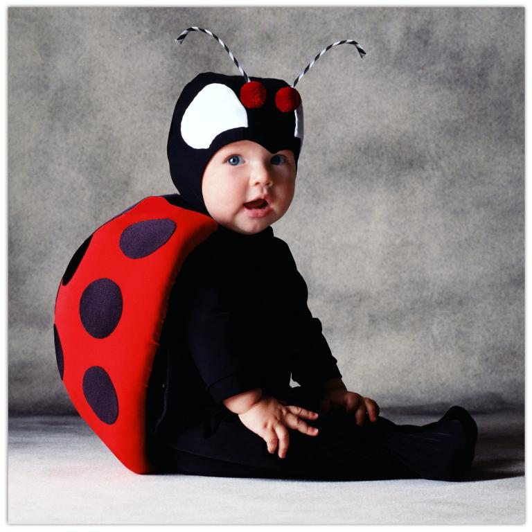 Tom Arma Lady Bug